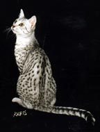Ghostwriter as a young adult in all his spotted splendor